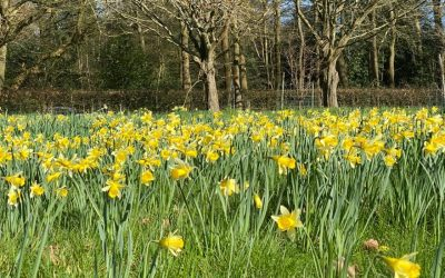 February top tips for the garden….