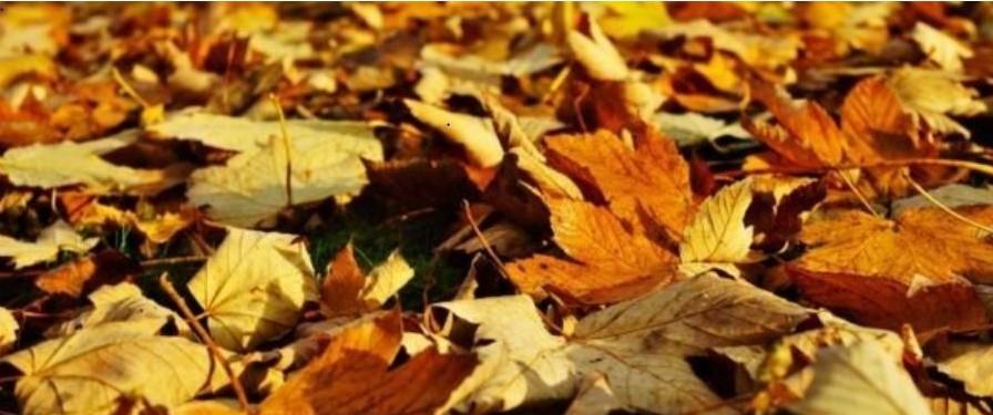 Falling leaves ….